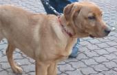 Symbolbild Fundhund